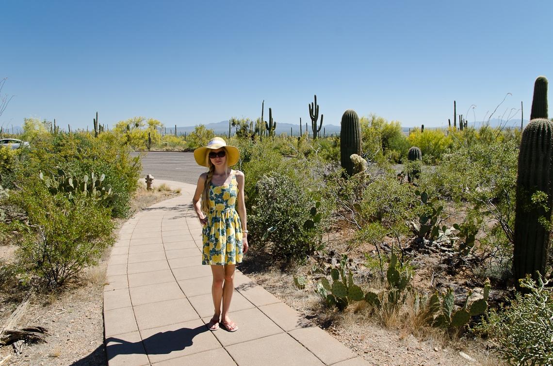 Arizona, Saguaro