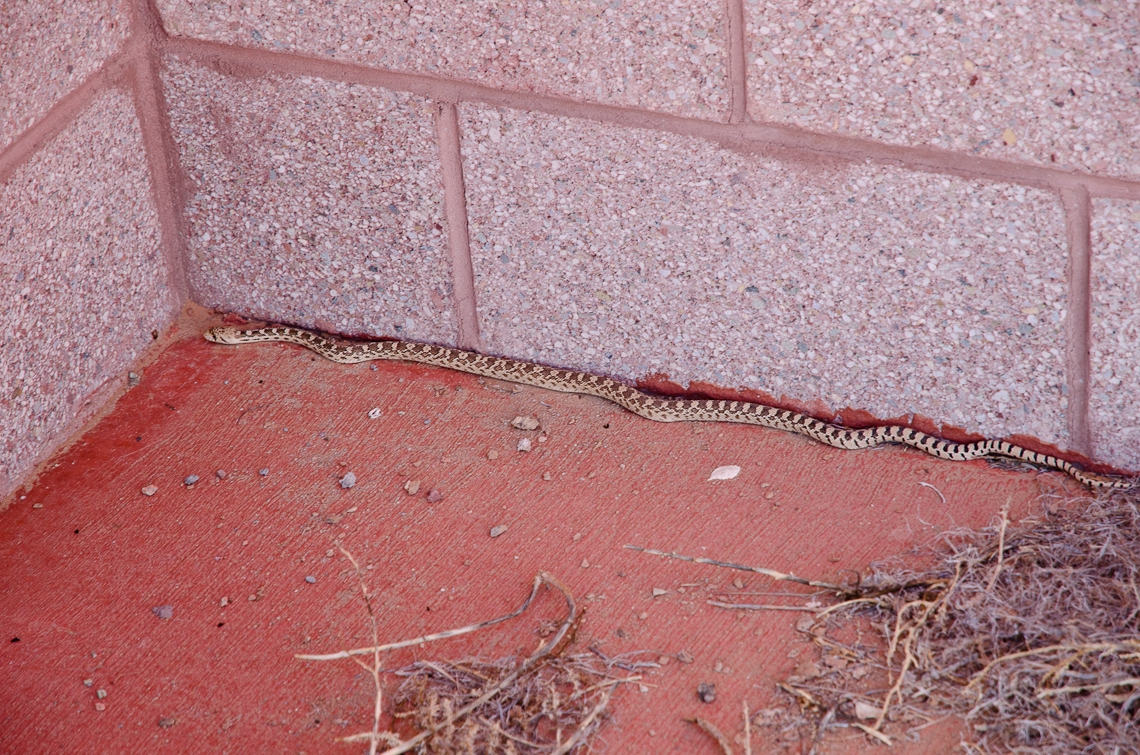 Four Corners, Snake