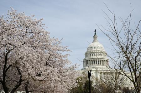 Washington, D.C., US Capitol, Sakura