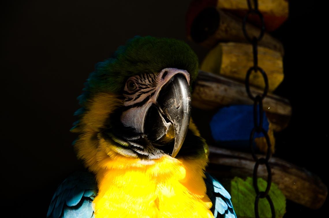 Форт-Лодердейл, Попугай / Fort Lauderdale, Parrot