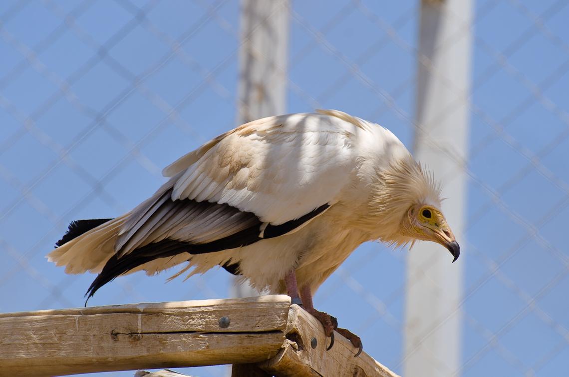 Israel, The Yotvata Hai-Bar Nature Reserve, Хай-Бар