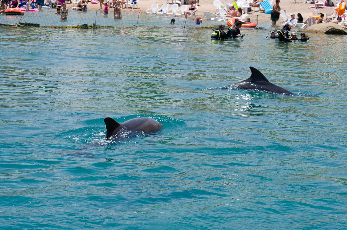 Israel, Eilat, Dolphins, Дельфины