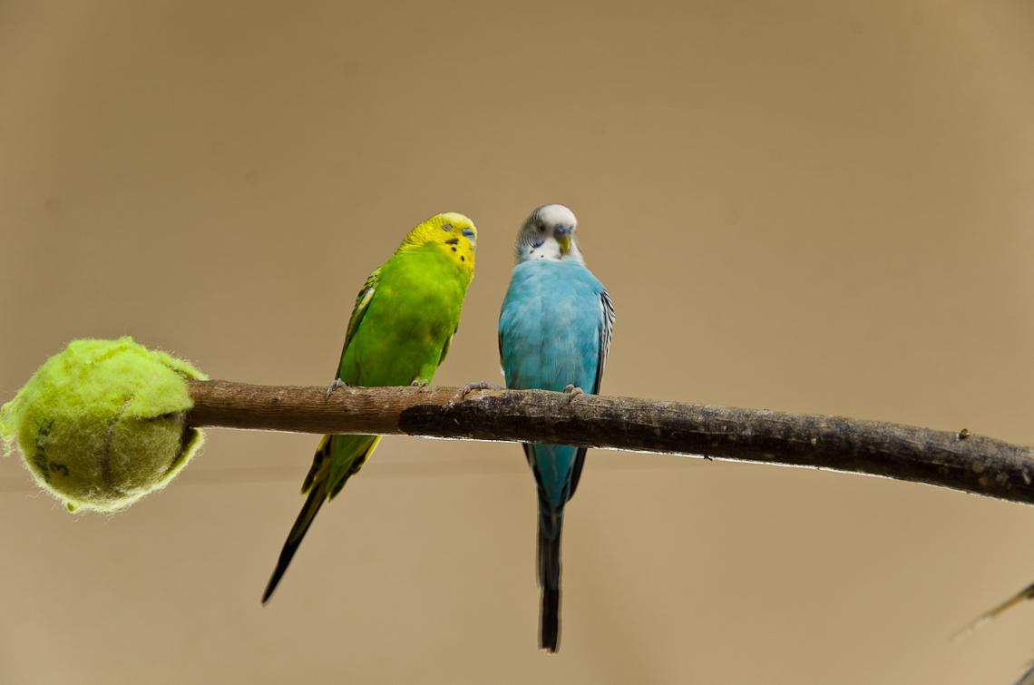 Lion Country Safari, Parrots