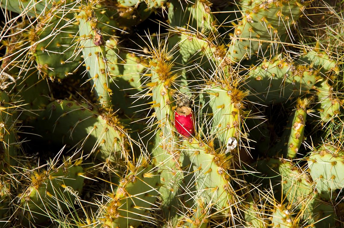 Зайон, Национальный парк, кактус / Zion National park, Zion NP
