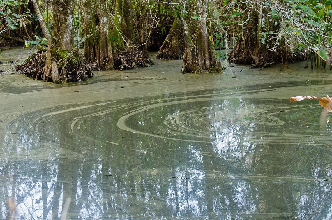 Corkscrew Regional Ecosystem Watershed