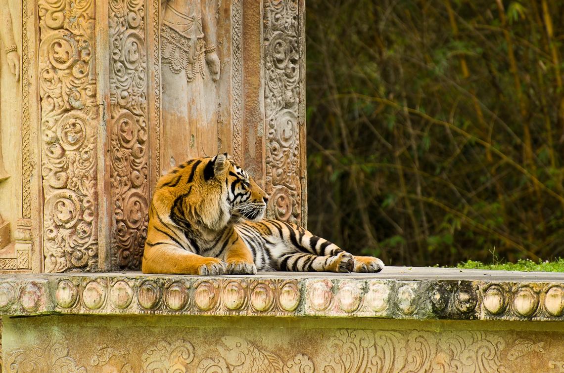 Miami, Zoo, Tiger