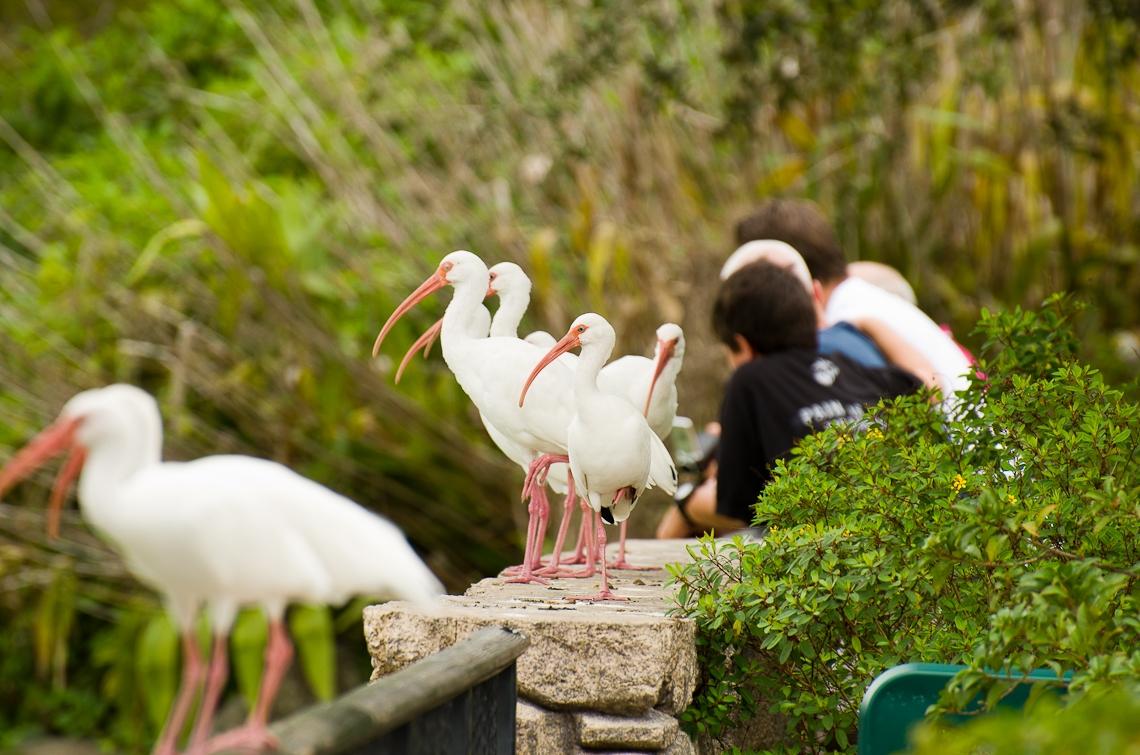 Miami, Zoo