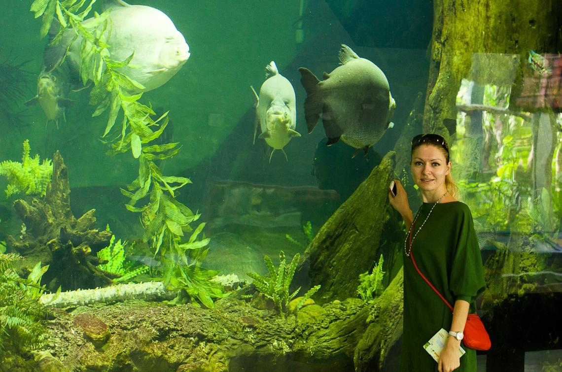 Miami, Zoo, Fishes