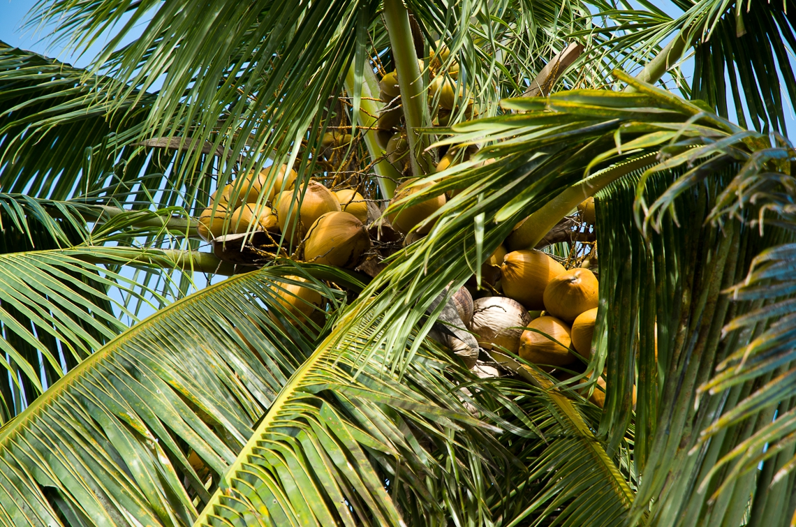 Miami, Fruit and Spice Park