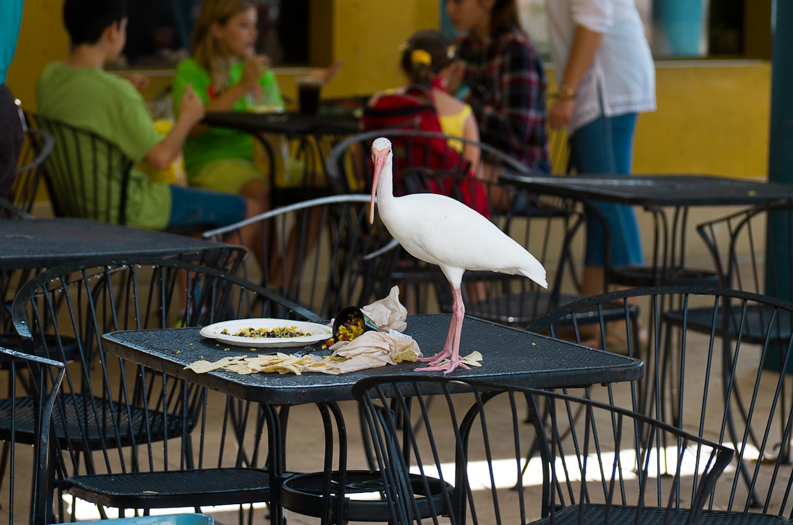 Miami, Zoo, Bird