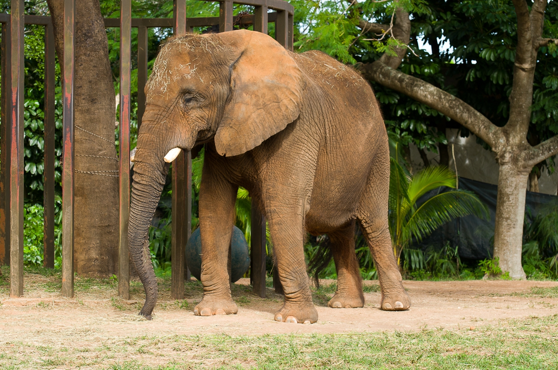 Miami, Zoo, Elephant