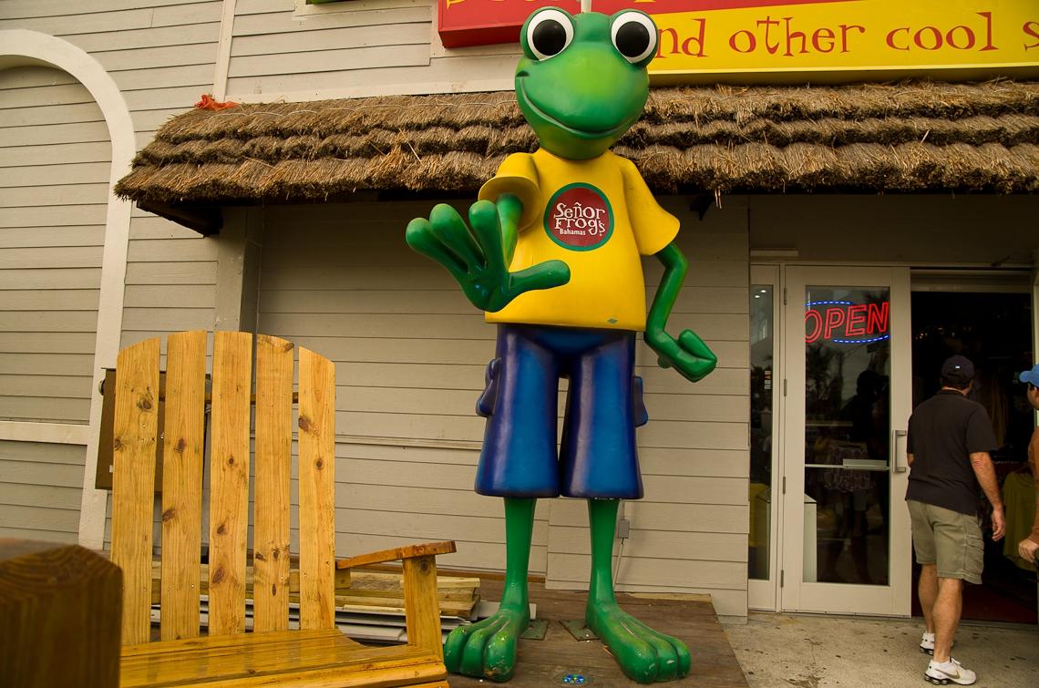 Bahamas, Nassau, Frog