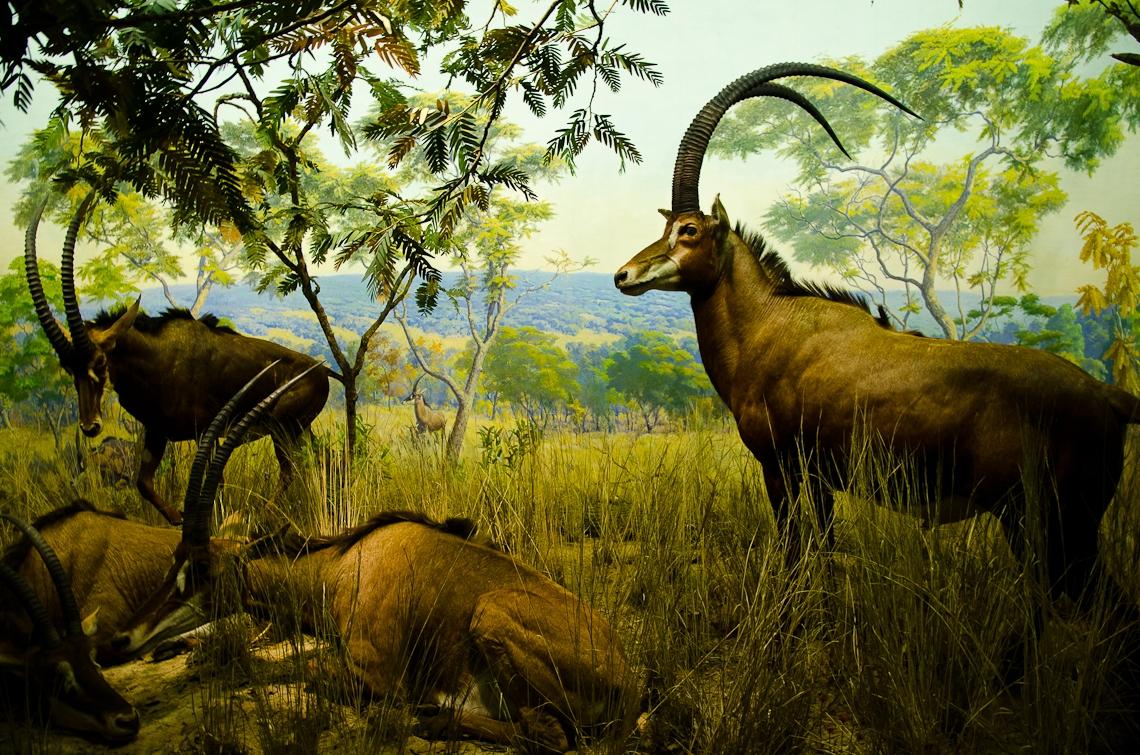 New York, Manhattan, American Museum of Natural History