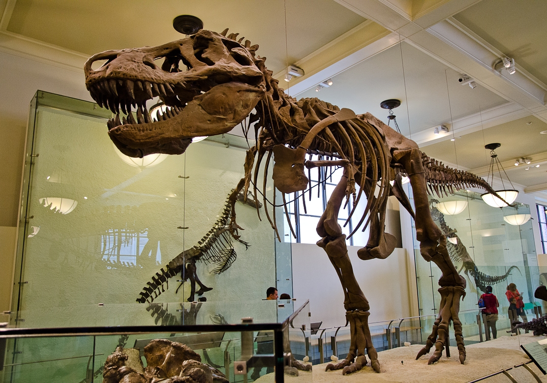 New York, Manhattan, American Museum of Natural History, T-Rex