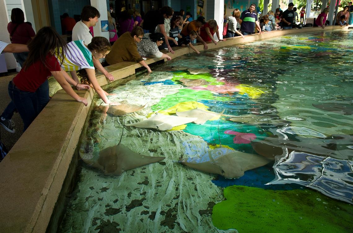 Sea World Orlando, Stingrays / Скаты