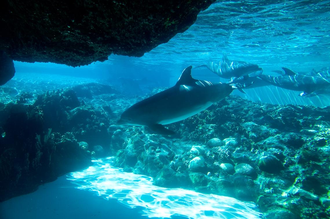 Sea World Orlando, Dolphins/ Дельфины