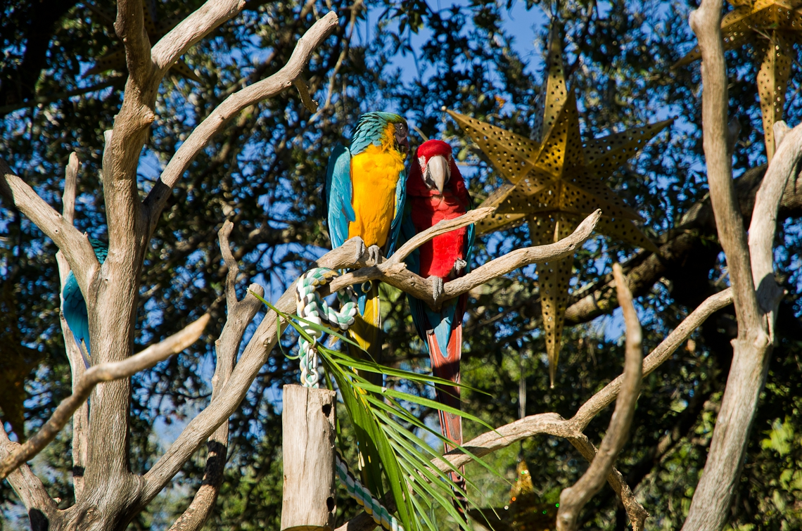 Sea World Orlando, Parrots / Попугаи