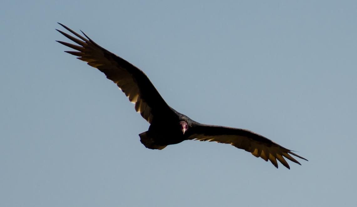 Хищная птица / Bird