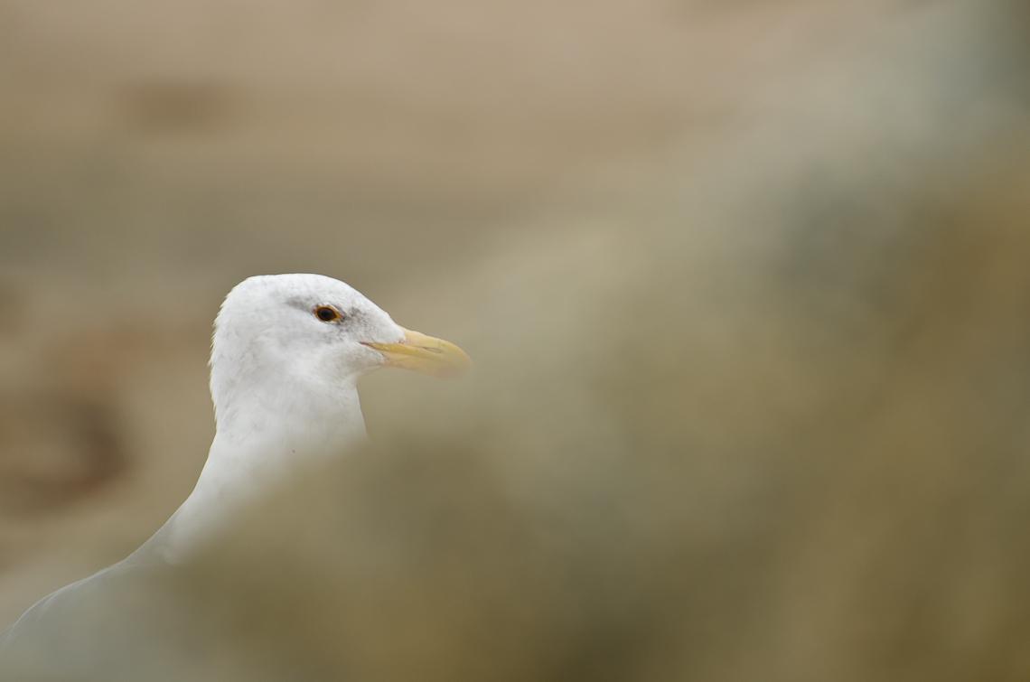 Тихий океан / Pacific ocean, SR 1, Seagull