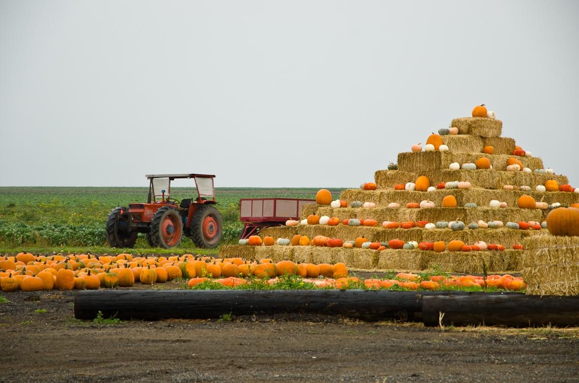 Тихий океан, Хеллоуин, Тыквы, Ферма / Pacific ocean, SR 1, Helloween, Pumpkins, Farm