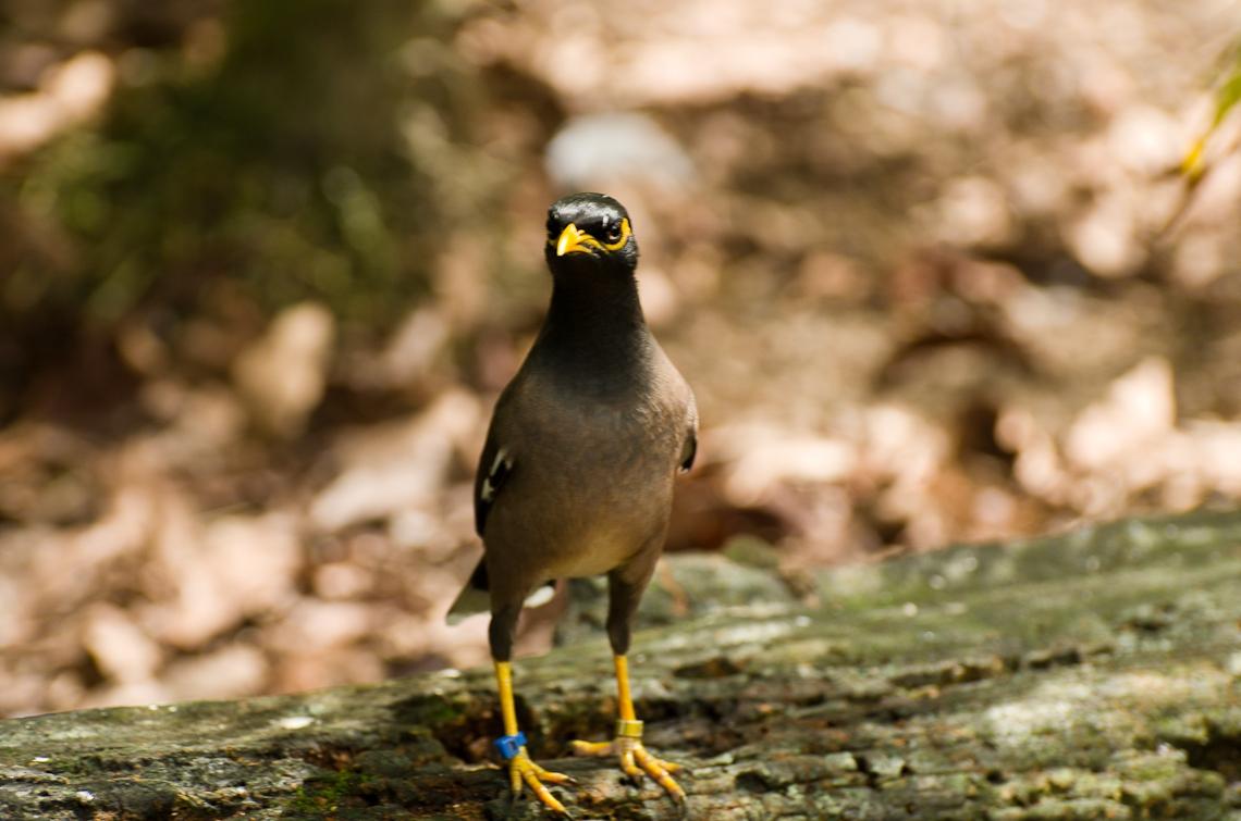 Bird, Птица